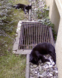 two of three black cats I met today… in a row!